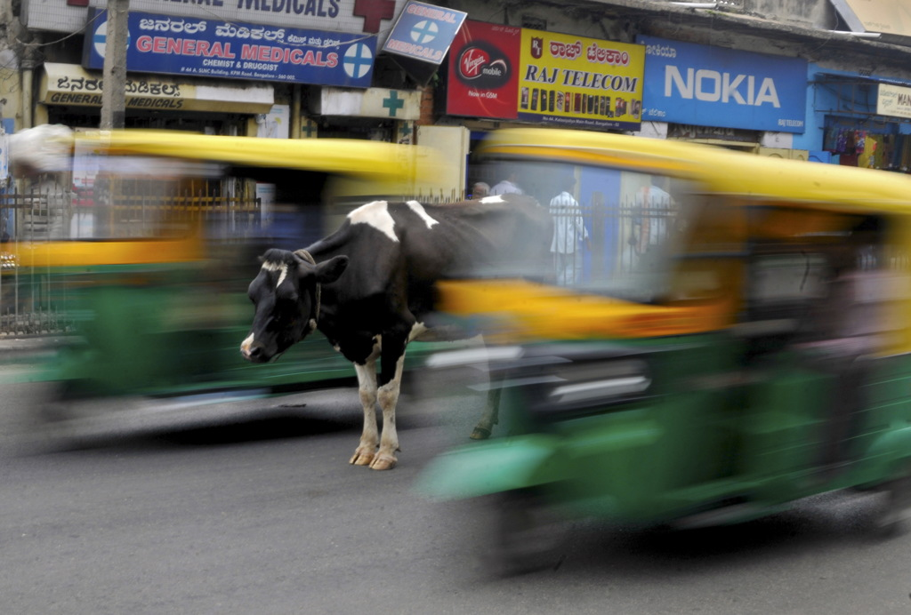 A cow stands in the middle of a busy road as auto-rickshaws pass by in Bengaluru, India, June 2, 2015. REUTERS/Abhishek N. Chinnappa      TPX IMAGES OF THE DAY      - RTR4YH65